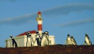 Exkursion zur Pinguinkolonie Isla Magdalena