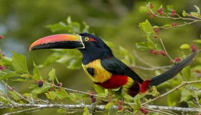 Urwaldwanderung im Nationalpark Piedras Blancas