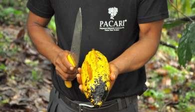 Besuch der Schokoladen-Manufaktur Pacari