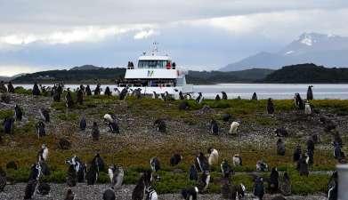 Bootsfahrt zur Pinguinkolonie Isla Martillo