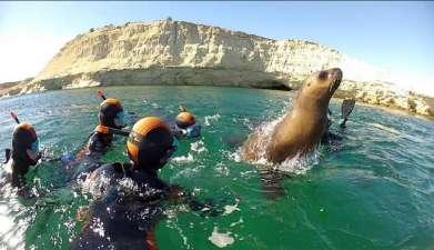 Schnorcheln mit Seelöwen