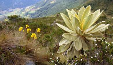 Tagesausflug Wanderung im Nationalpark Iguaque