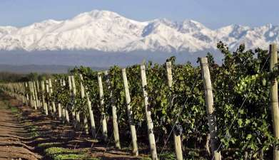 Tour de vinos