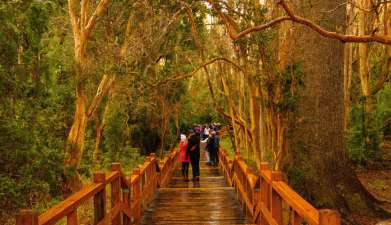 Halbtagesausflug Isla Victoria und Bosque de Arrayanes