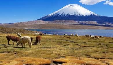 Exkursion in den Lauca Nationalpark, mit Lago Chungara und Parinacota