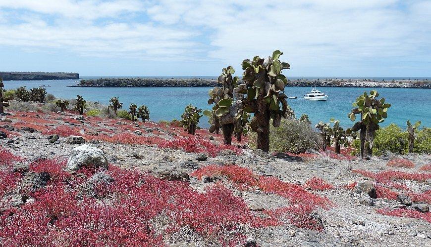 Warum Sie Die Galapagos Inseln Besuchen Sollten