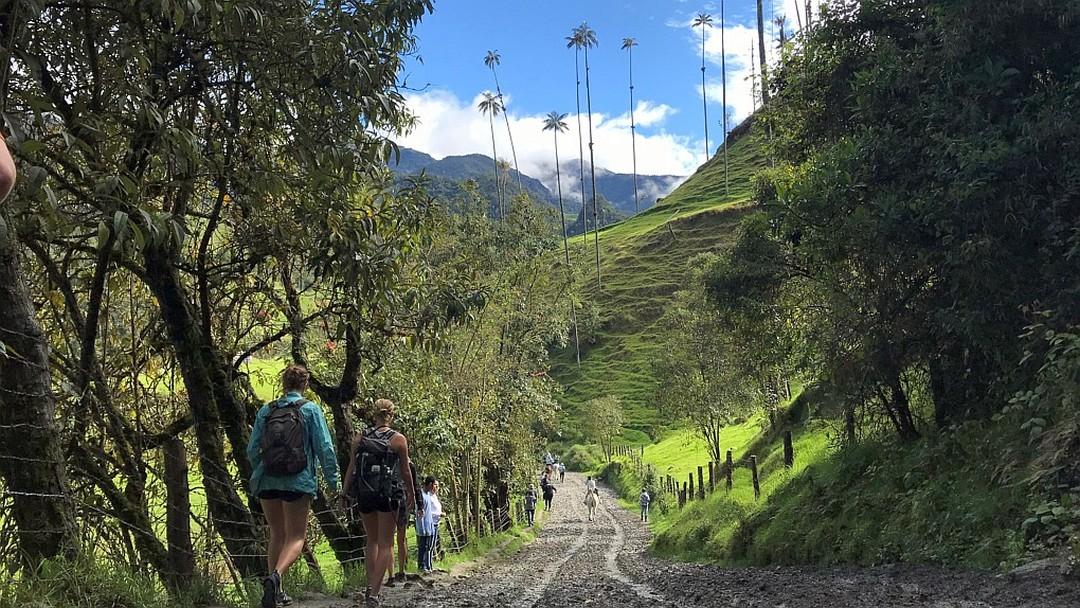 Tag 3 Kaffeedreieck: Tagestour ins Valle de Cocora und nach Salento