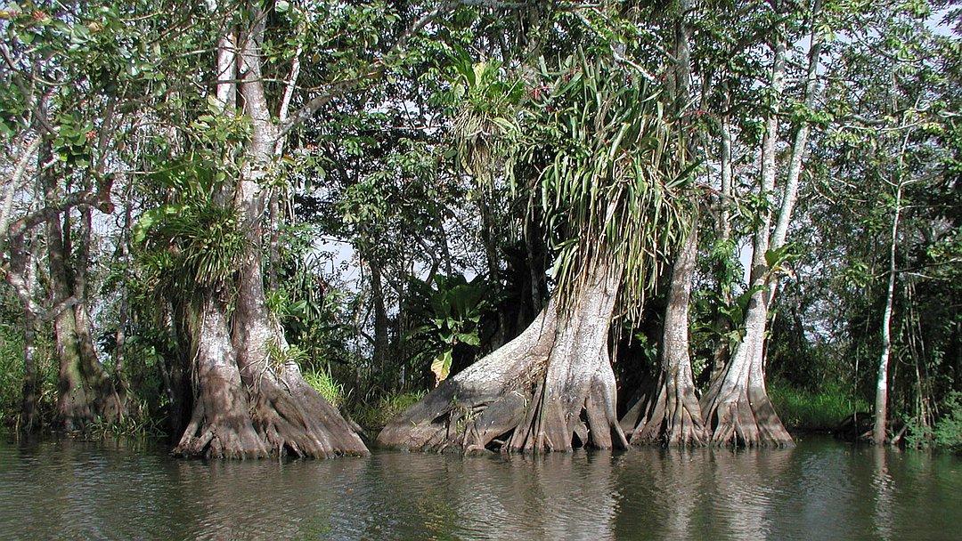 Tag 3 Boca de Sábalos - Solentiname: Los Guatuzos