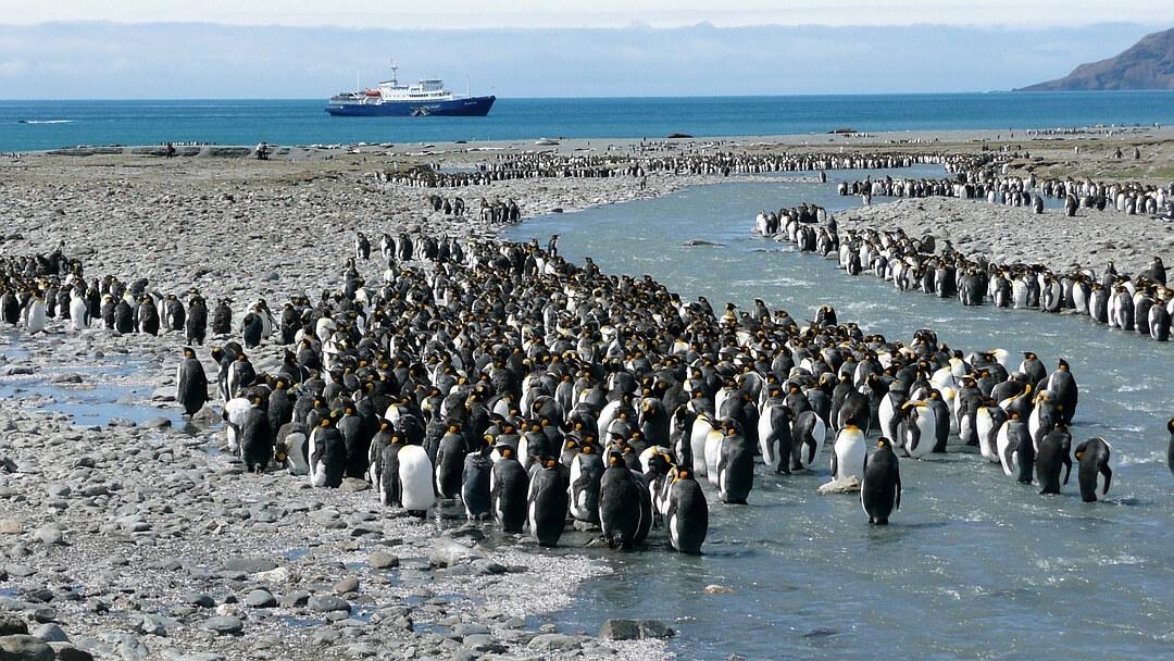 Tag 4 bis 9: Sie erkunden die Antarktische Halbinsel