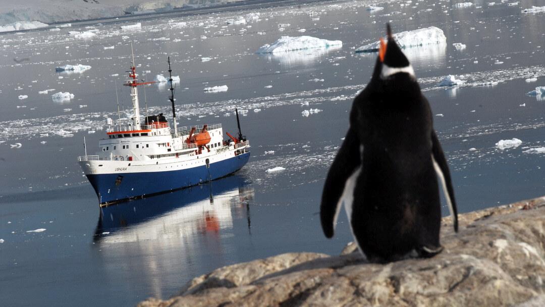 Tag 15 bis 17: Sie erkunden die Antarktische Halbinsel