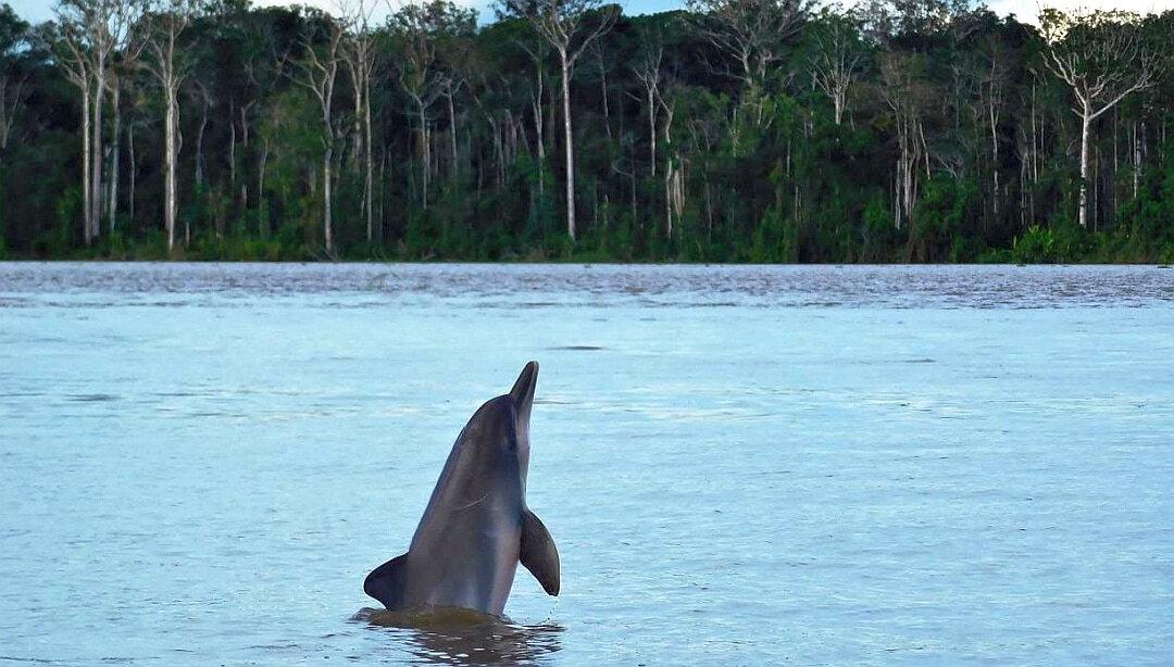 Tag 3 Calanoa: Tagesexkursion Ticuna Indianer, Lago Tarapoto und Puerto Nariño