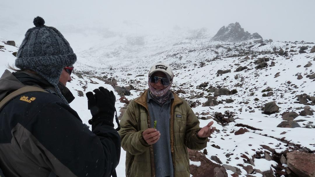 Tag 6  Riobamba-Naturreservat Chimborazo-Lasso