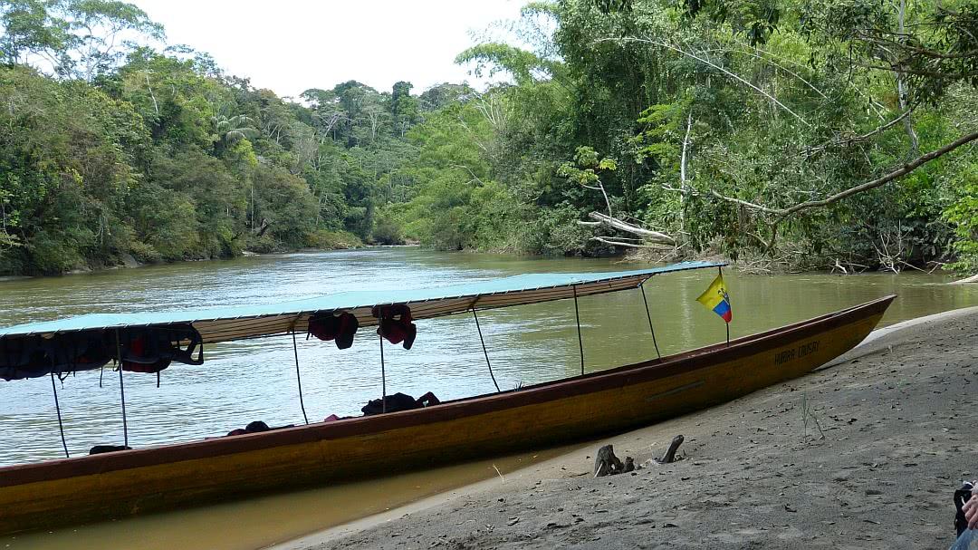 Tag 9 Amazonas: Exkursion im tropischen Regenwald