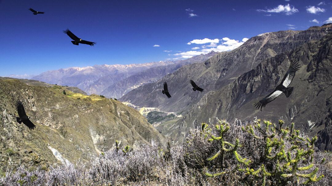 Tag 1: Von Arequipa nach San Juan de Chuccho