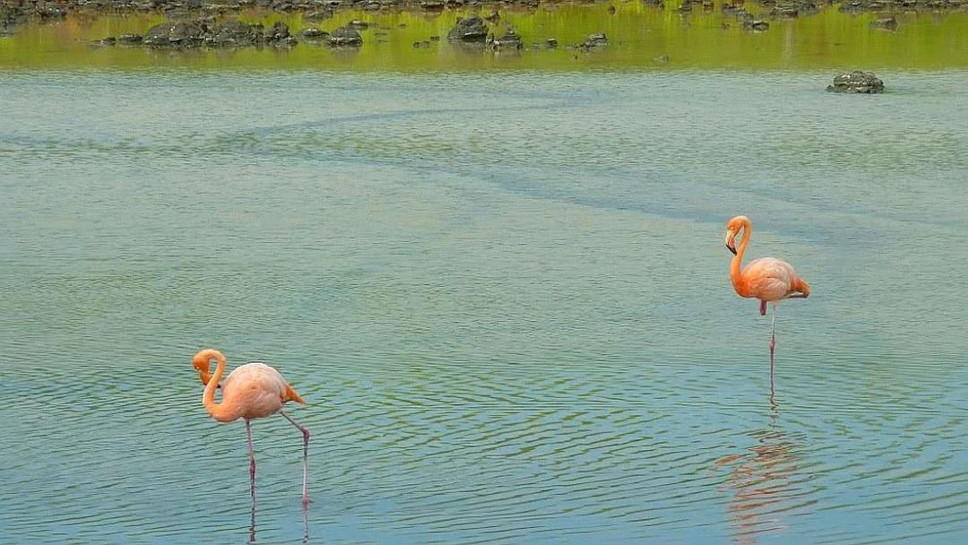 Tag 3 Insel Isabela (Punta Moreno, Elizabeth-Bucht, Marielas-Inseln)