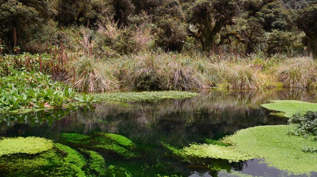 Tag 10 Popayan: Purace Nationalpark