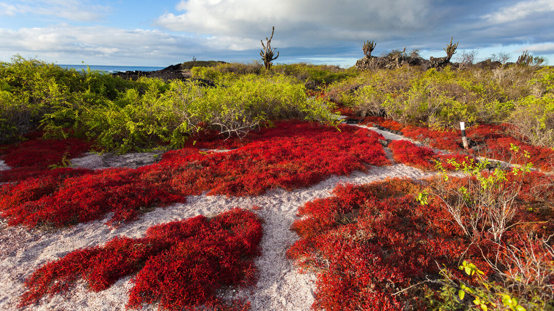 Tag 7: Insel Floreana mit Punta Cormorant, Corona del Diablo und Post Office Bay