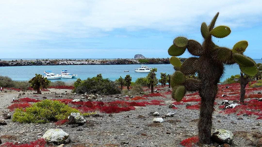 Tag 4 Insel Plaza Sur  und Insel Santa Fé