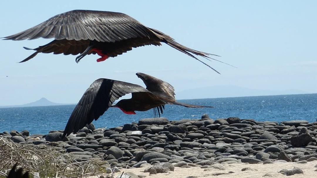 Tag 8: Insel Seymour Norte -Insel Baltra (Flughafen)