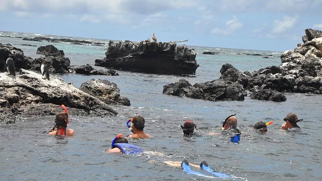 Tag 2: Inseln Isabela und Fernandina