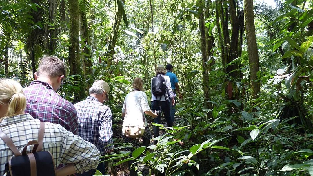 Tag 5 (Sonntag) Regenwald Wanderung und Pakari-Schokoladentour