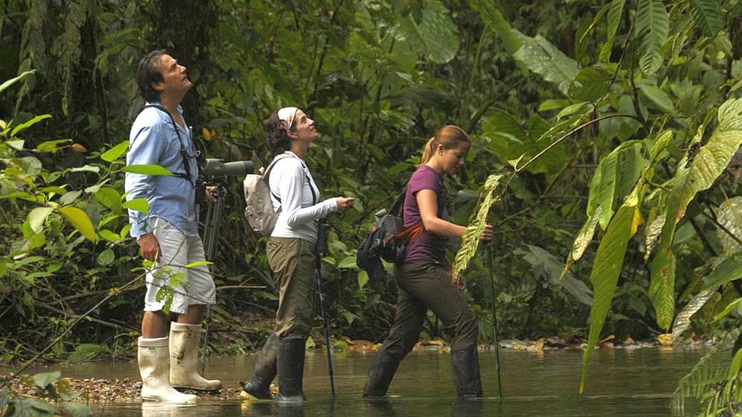Tag 7 (Dienstag) Tropischer Regenwald