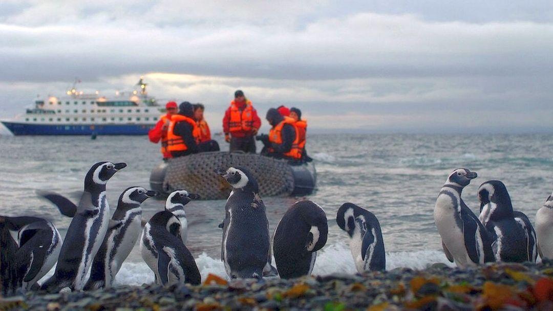 Tag 5: Isla Magdalena und Ankunft in Punta Arenas