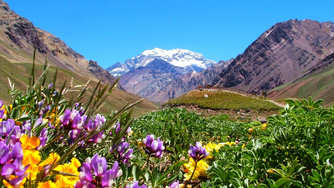 Tag 2 Mendoza: Ganztagesausflug Alta Montaña