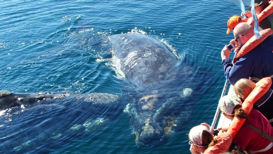 Tag 2 Puerto Madryn: Tagestour auf die Halbinsel Valdés mit Walbeobachtung