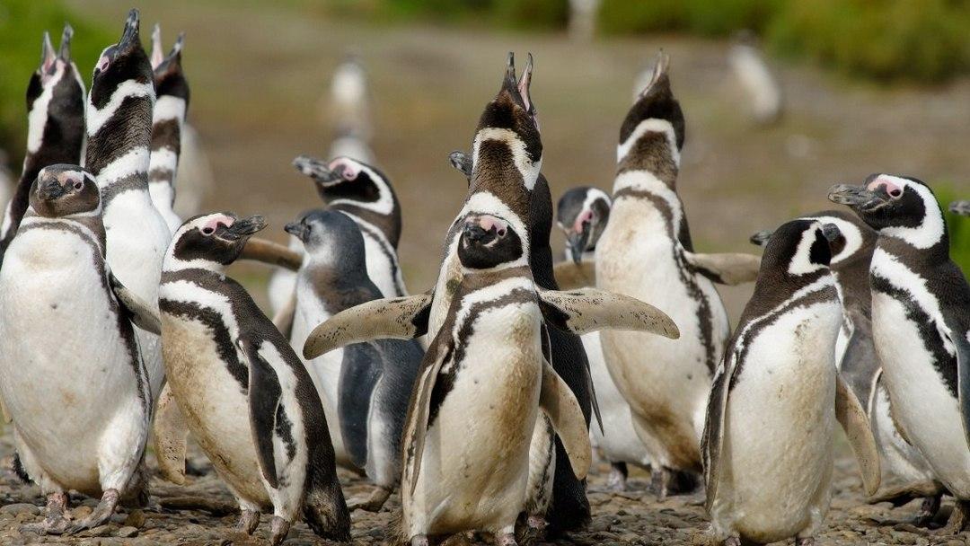 Tag 3 Puerto Madryn: Tagestour Pinguinkolonie Punta Tombo und Delfine