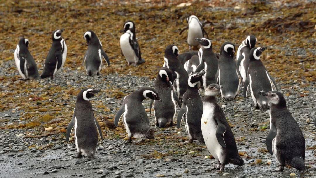 Tag 2 Punta Arenas-Puerto Natales: Ausflug zur Isla Magdalena