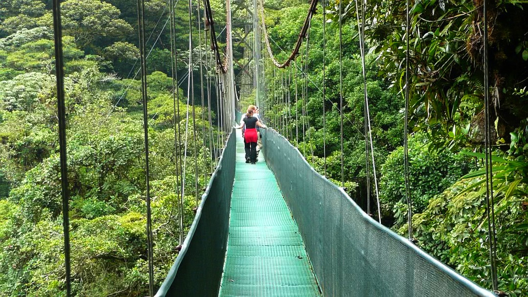 Tag 11 Monteverde: Selvatura-Hängebrücke