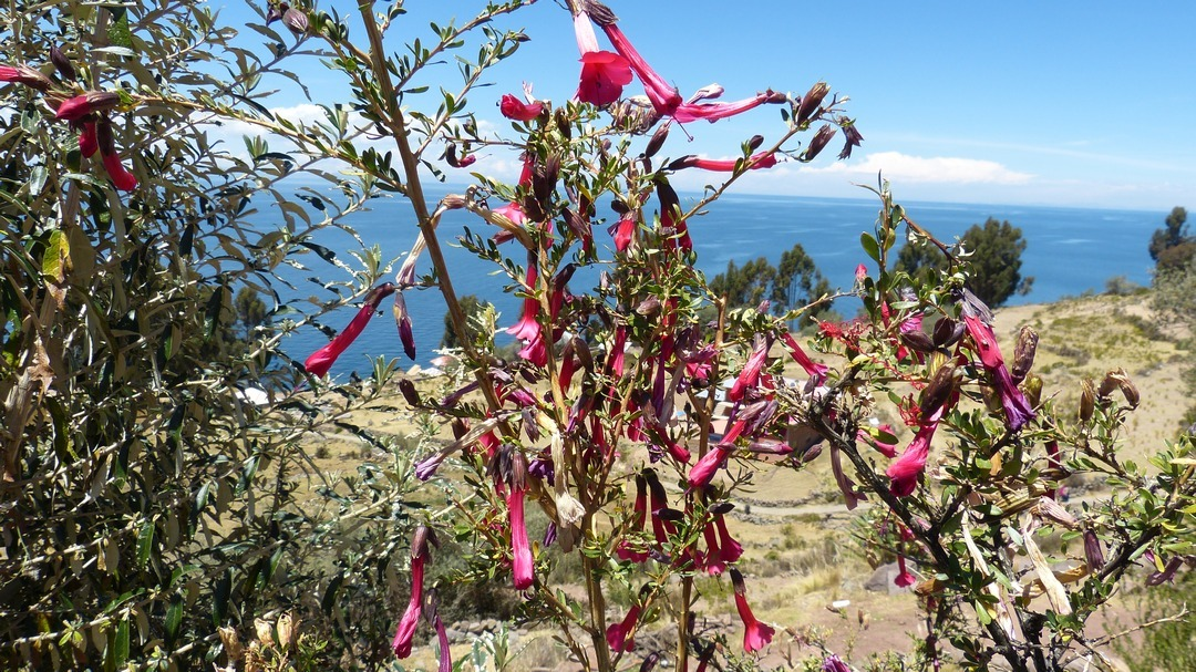 Tag 6 Puno: Tagestour zu den Schilfinseln auf dem Titicacasee