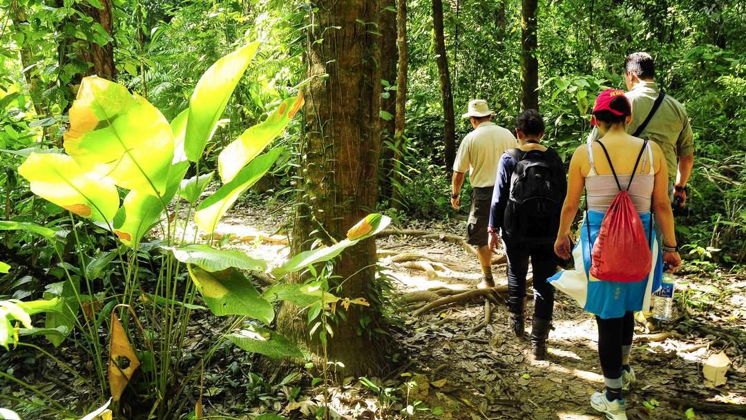 Tag 2 Halbinsel Osa: Corcovado Nationalpark