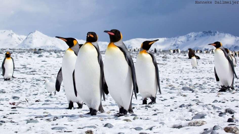 MS Ortelius Antarktis Reise: Südgeorgien
