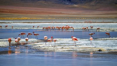 Südamerikareise - Entlang der Anden