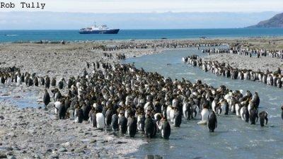 MS Plancius Antarktis Reise: Südgeorgien