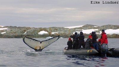 MS Plancius Antarktis Reise: Wale beobachten