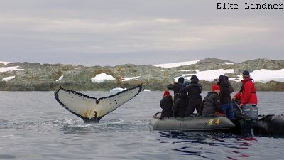 Bild MS Plancius Antarktis Reise: Wale beobachten
