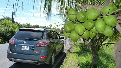 Bild Costa Rica Mietwagenreise Karibik-Osa-Pazifik