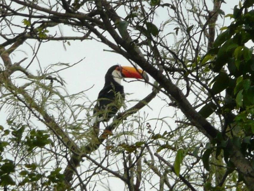 Riesentukan Iguazú