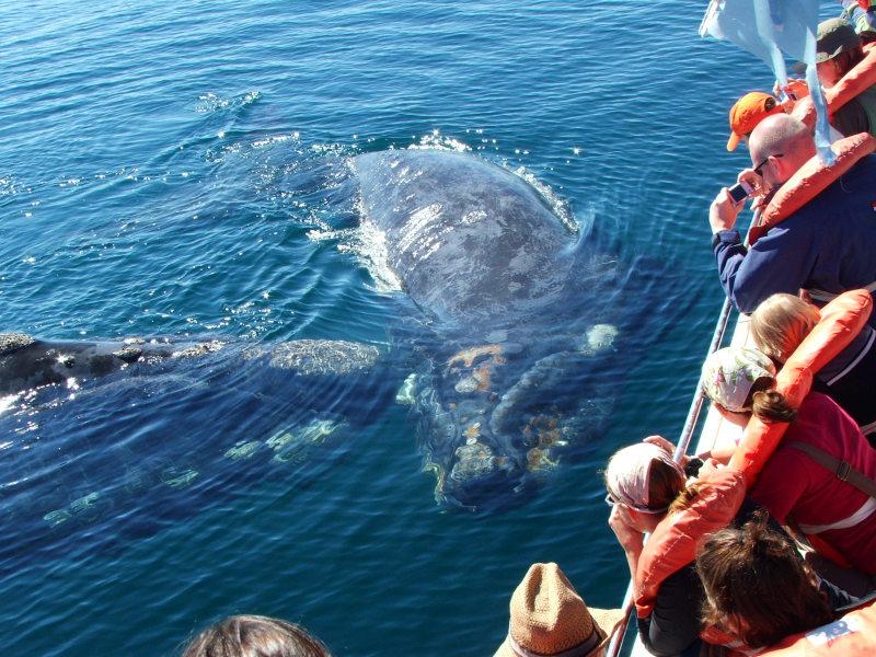 Walbeobachtung Halbinsel Valdés Argentinien
