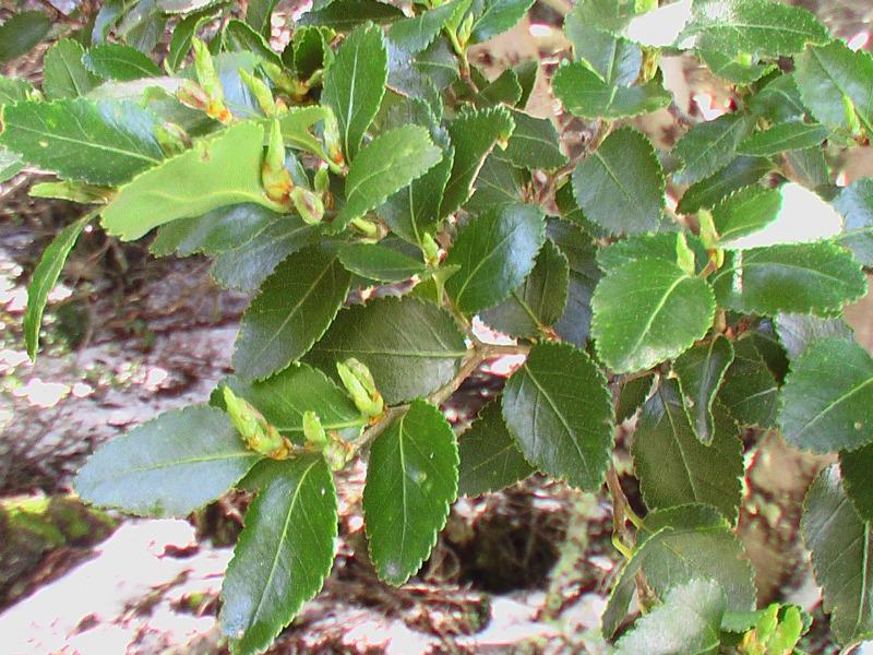 Flora und Fauna Ushuaia, Argentinien
