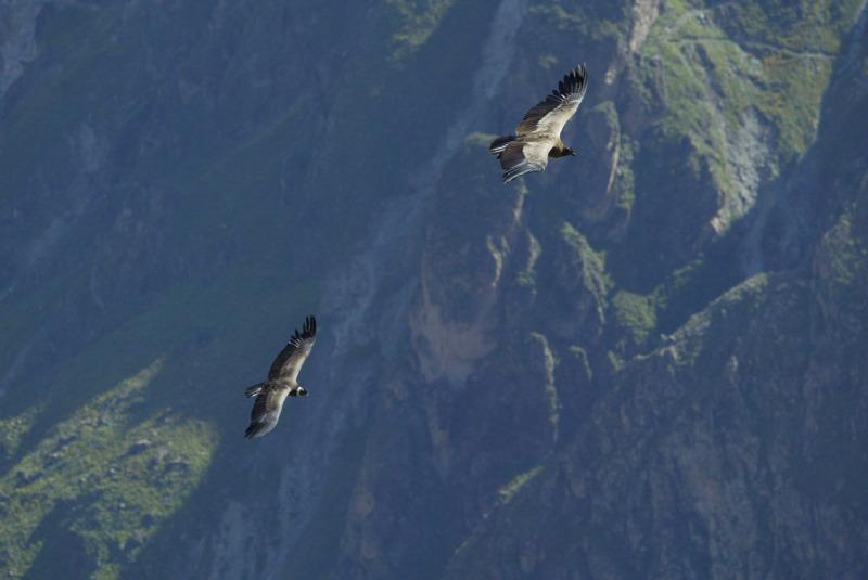 Andenkondore, Arequipa, Peru - Reiseinformationen