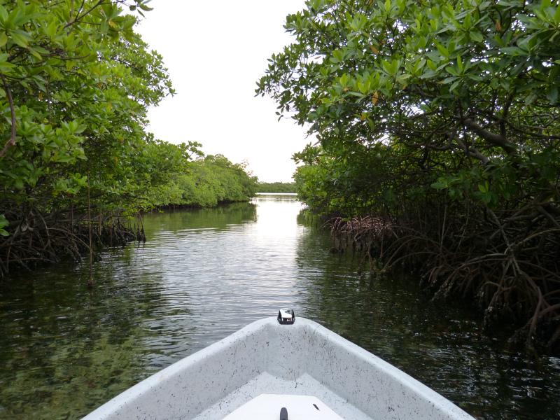 Anreise per Boot auf Inselarchipel Bocas del Toro, Panama