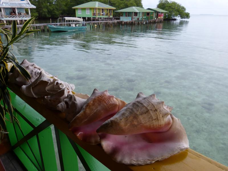 Muscheln in Bocas del Toro, Panama