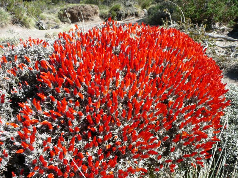 Flora und Fauna in El Chaltén, Argentinien