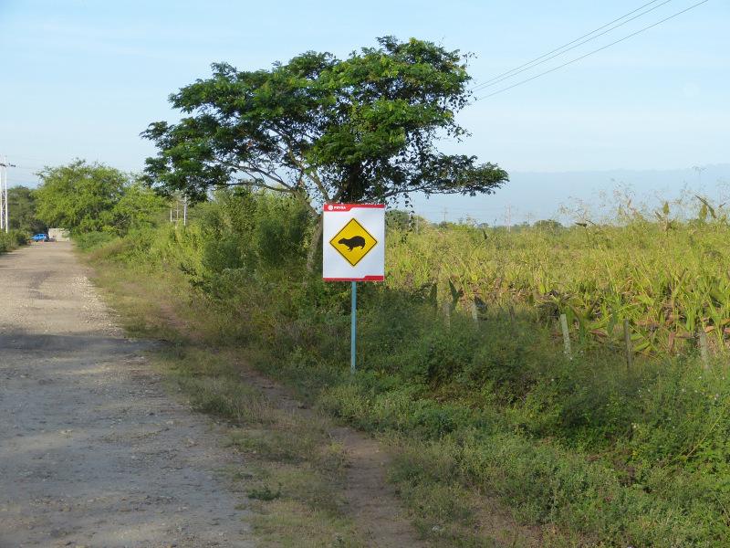 Straße in Los Llanos, Venezuela