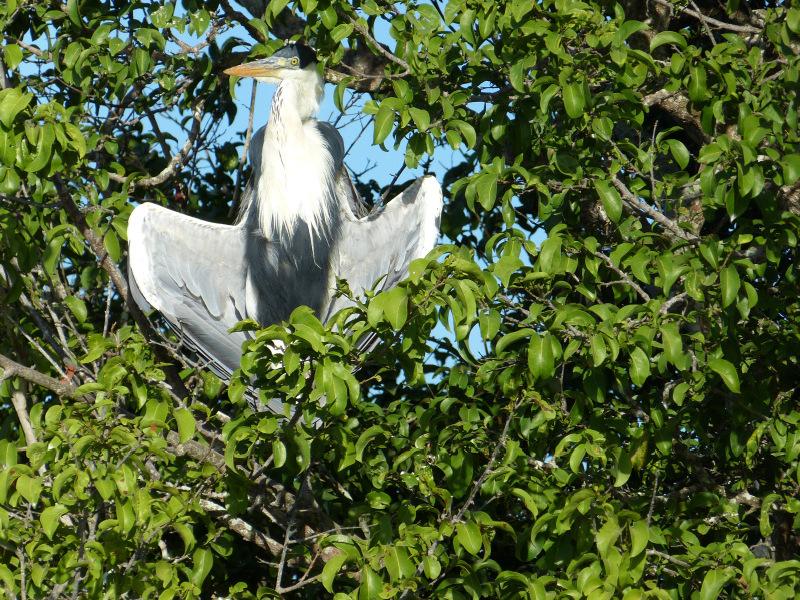 Flora und Fauna Los Llanos