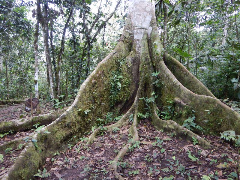 Sangay Nationalpark